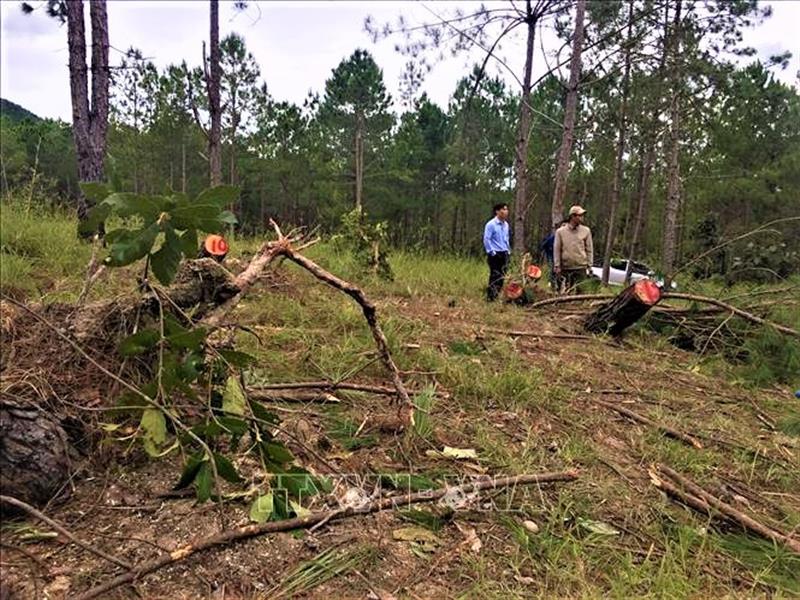 Hiện trường vụ phá rừng tại Gia Lâm, huyện Lâm Hà